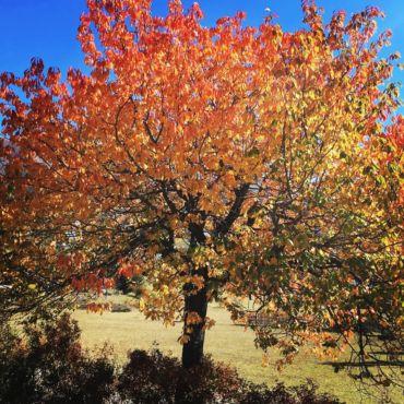 8 conseils pour un automne au top