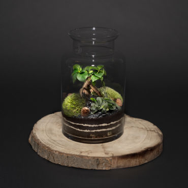 VegaHoly terrarium le Catalogue