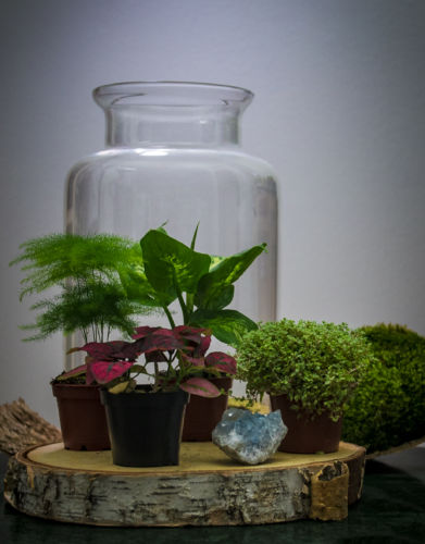 kit terrarium travel the world