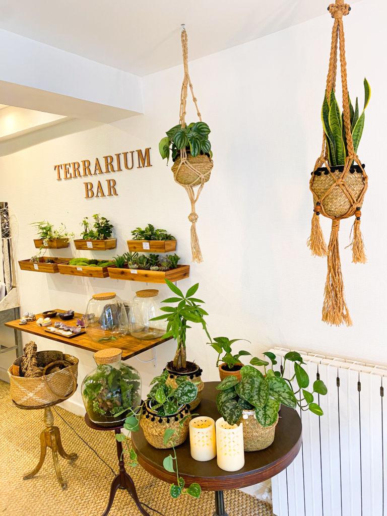 atelier VegaHoly terrarium compiegne